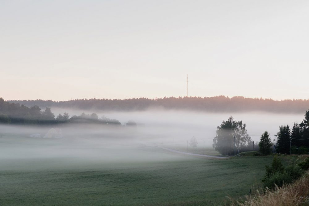 morning mist swedish summer