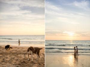 stray dogs on kan tiang beach koh lanta