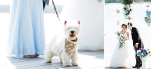 dog of honour Sweden
