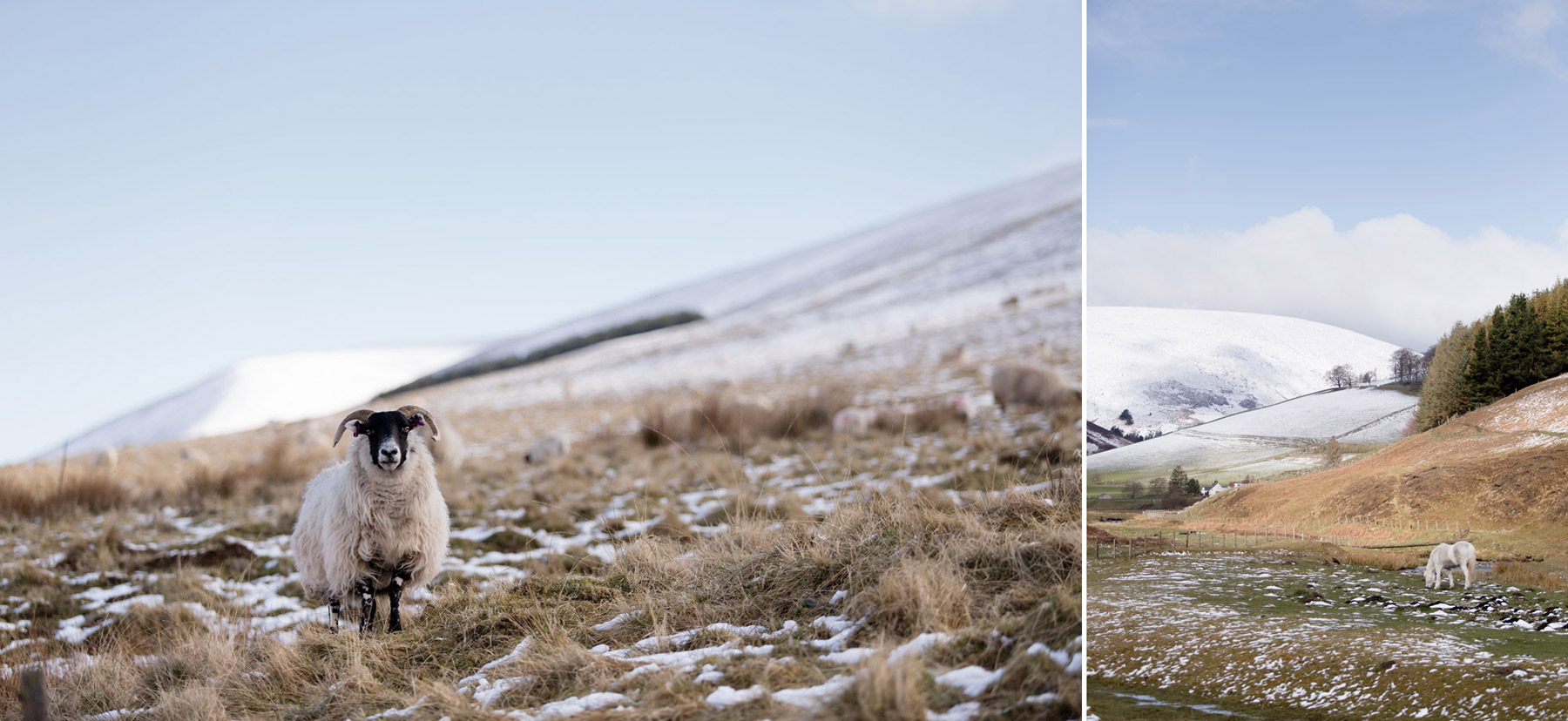 Snotackta kullar i Skottland